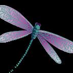 DragonflySuz