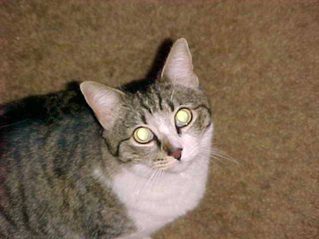 Show profile for Caro (pertycat)